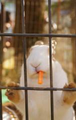 ちょいワルウサギ