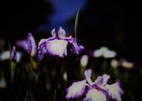 PENTAX 645NⅡで撮影した(初夏の光に包まれて)の写真(画像)