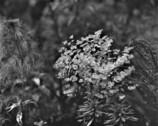色の無い花たち