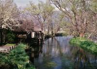 COSINA Zeiss Ikonで撮影した(春の流れ)の写真(画像)