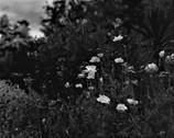 色の無い花たち 2