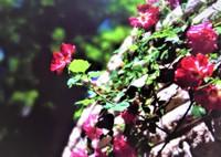 PENTAX 645NⅡで撮影した(初夏の陽射しの中で)の写真(画像)