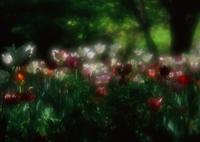 PENTAX 645NⅡで撮影した(夢・・・)の写真(画像)