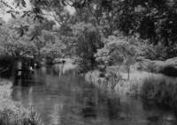 秋の流れ (フィルムの残像)