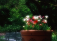 PENTAX 645NⅡで撮影した(鉢花)の写真(画像)
