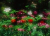 PENTAX 645NⅡで撮影した(おしゃべりな妖精たち)の写真(画像)