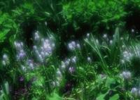 PENTAX 645NⅡで撮影した(小さな妖精たち)の写真(画像)