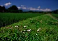 PENTAX 645NⅡで撮影した(白い花)の写真(画像)