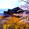 桜色に染まる舞台
