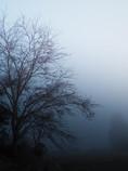 濃霧注意報発令