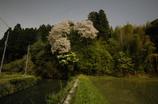 春の宵に月あかりで桜を撮る