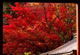 室生寺紅葉