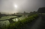 お写んぽ 霧の朝
