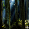 深い森の中から