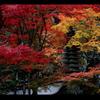 西林寺の紅葉