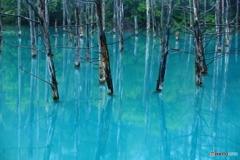 青い池(クローズアップ)