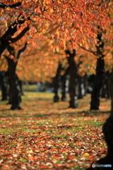 五稜郭公園の紅葉