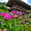 日本風景983 紫陽花
