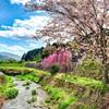 日本風景909 京都大原 春