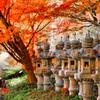 日本風景1029 秋