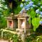 日本風景969 紫陽花