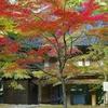 日本風景1242 紅葉