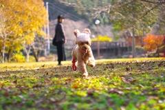DOG101  秋