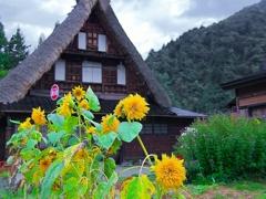 日本風景1227 茅葺