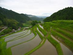 日本風景1080 棚田
