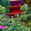日本風景1103紫陽花