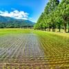 日本風景931 田園