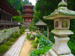日本風景1109紫陽花