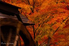もう、すぐ秋ですね!