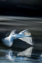 白の羽ばたき2