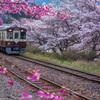 春の中を走る。