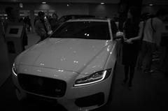 Jaguar in fukuoka