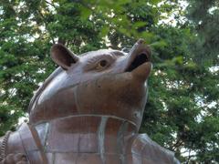巨大狸顔面