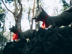 霊狐 コイン大狐