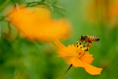 花粉に夢中