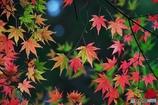 秋の壁紙 8