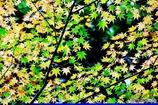 秋の壁紙 5
