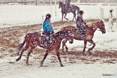 Horse training in the snow 2