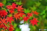 秋の壁紙 6