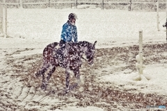 Horse training in the snow 3