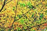 秋の壁紙 4