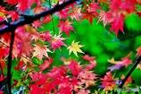 秋の壁紙 7