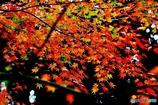 秋の壁紙 9