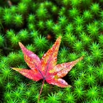 When I feel autumn