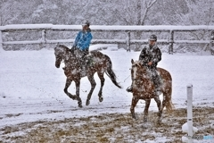 Horse training in the snow 1