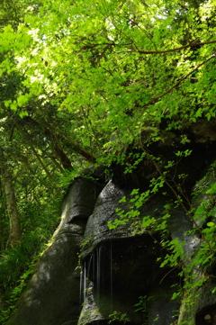 新緑の渓谷3